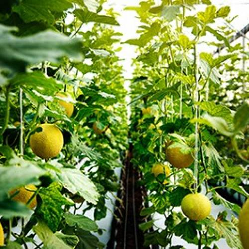 Marketing Agricultural Commodities on Global Markets